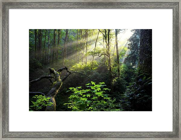 Sacred Light Framed Print