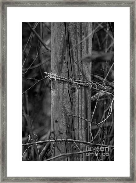 Sacred Framed Print