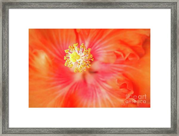 Sacred Song Framed Print