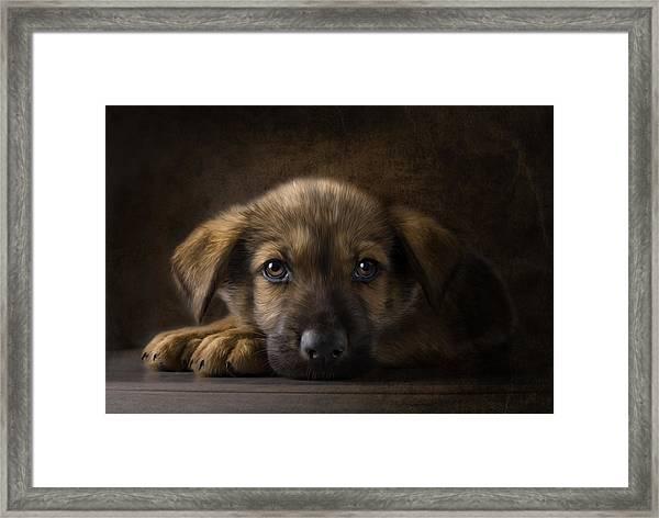 Sad Puppy Framed Print by Bob Nolin