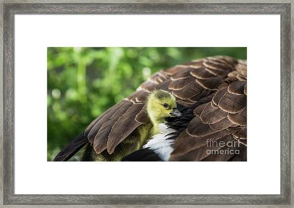 Safe Place Framed Print