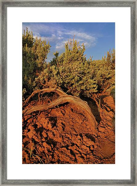Sagebrush At Sunset Framed Print