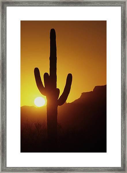 Saguaro Cactus And Sunset Framed Print