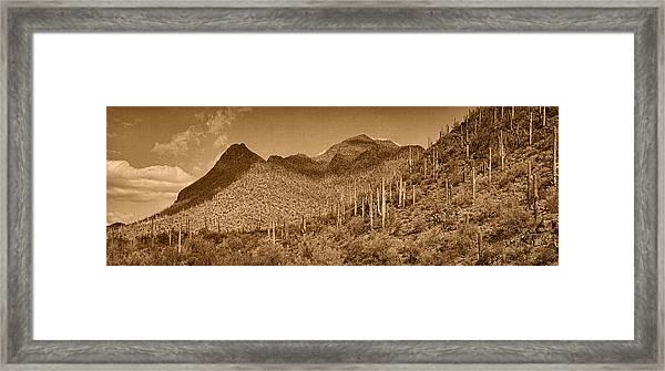 Saguaro Hillsides Tint  Framed Print