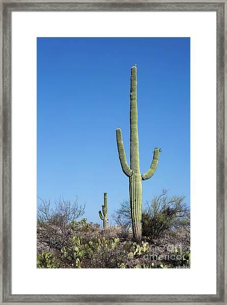 Saguaro National Park Arizona Framed Print
