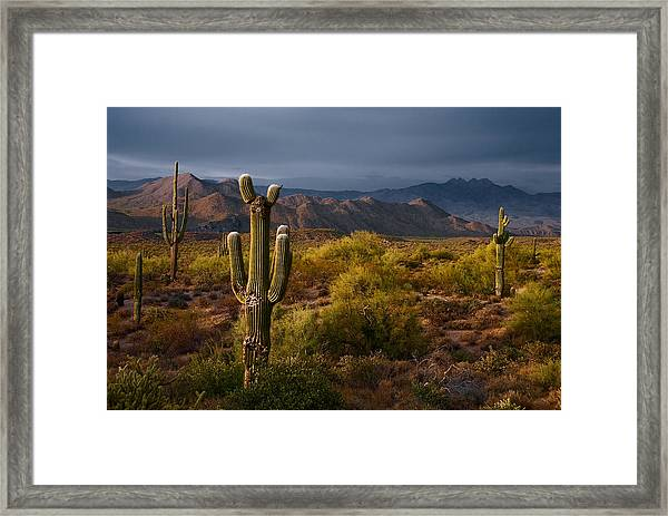 Saguaro Sunset At Four Peaks Arizona Framed Print