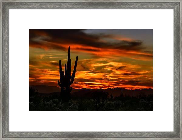 Saguaro Sunset H51 Framed Print