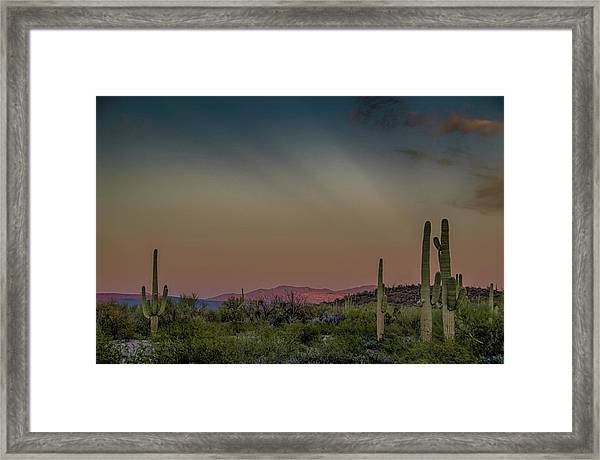 Saguaros Salute Rays Rising Framed Print