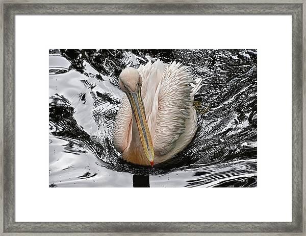 Sailing Along Framed Print