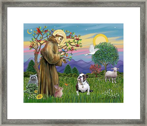 Saint Francis Blesses A Brown And White English Bulldog Framed Print
