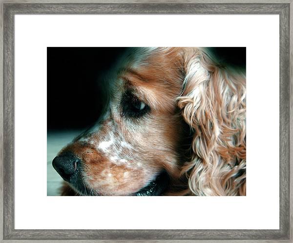 Saint Shaggy Art Photograph  13 Framed Print