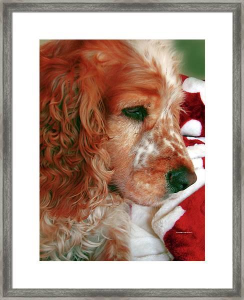 Saint Shaggy Art Photograph  14 Framed Print