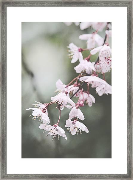 Sakura #278 Framed Print