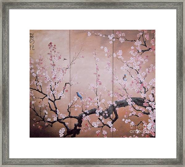 Sakura - Cherry Trees In Bloom Framed Print