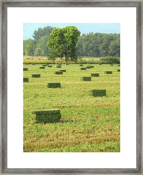 Salem Hay Field Framed Print