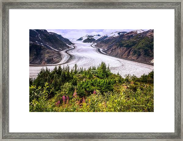 Framed Print featuring the photograph Salmon Glacier by Claudia Abbott