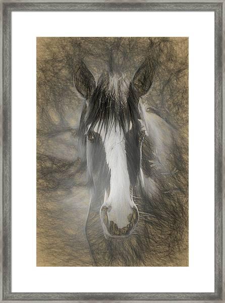Salt River Stallion Framed Print