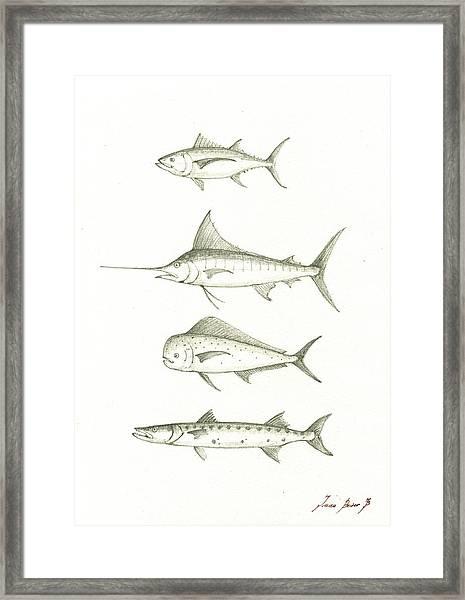 Saltwater Gamefishes Framed Print