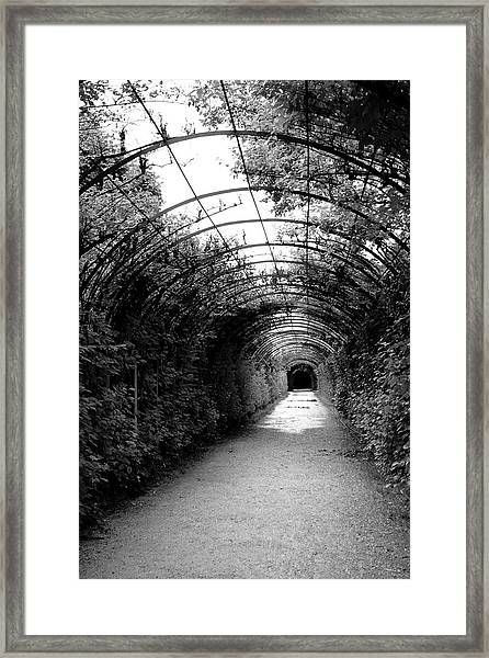 Salzburg Vine Tunnel - By Linda Woods Framed Print