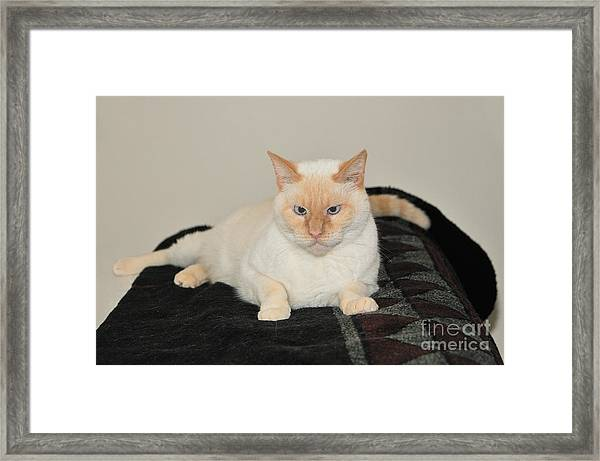 Sam I Am Framed Print