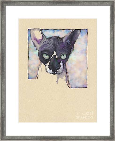 Sam The Sphynx Framed Print
