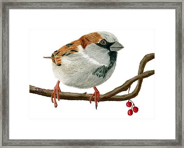 Sammy Sparrow Framed Print