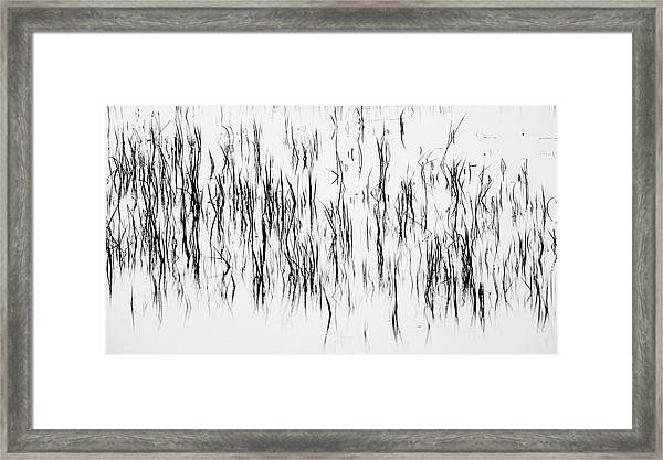 San Diego River Grass In Black And White Framed Print