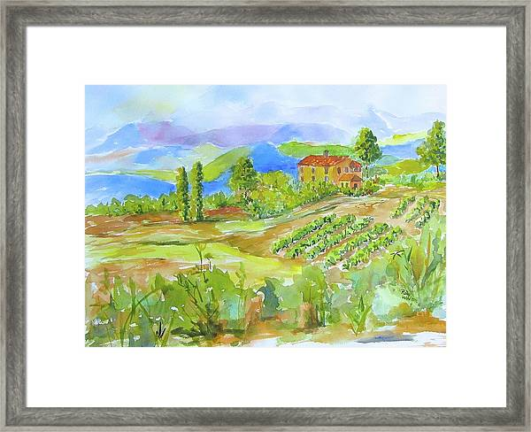 Vineyard At San Gimignano Framed Print