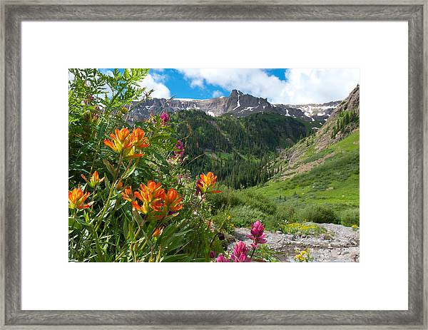 San Juans Indian Paintbrush Landscape Framed Print