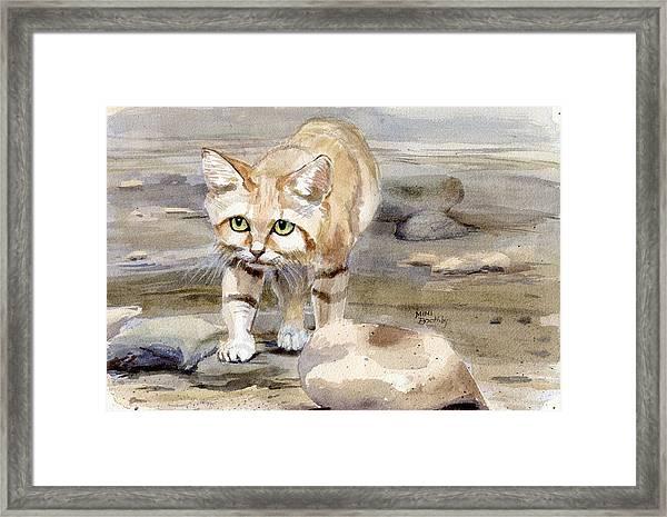 Sand Cat - Felis Margarita Framed Print