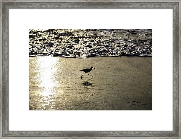 Sand Piper Dash Framed Print