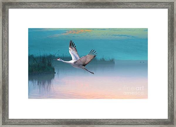 Sandhill Crane And Misty Marshes Framed Print