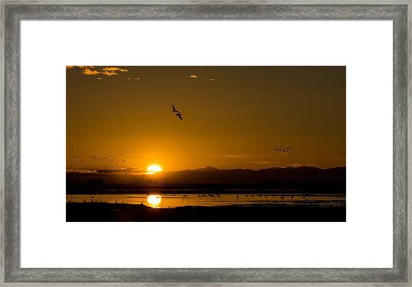 Sandhill Crane Sunrise Framed Print