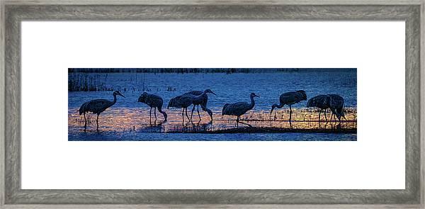 Sandhill Cranes At Twilight Framed Print