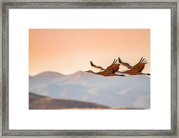 Sandhill Cranes Flying Over New Mexico Mountains - Bosque Del Apache, New Mexico Framed Print