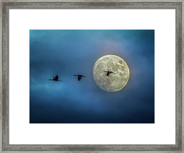 Framed Print featuring the photograph Sandhill Cranes With Full Moon by Patti Deters