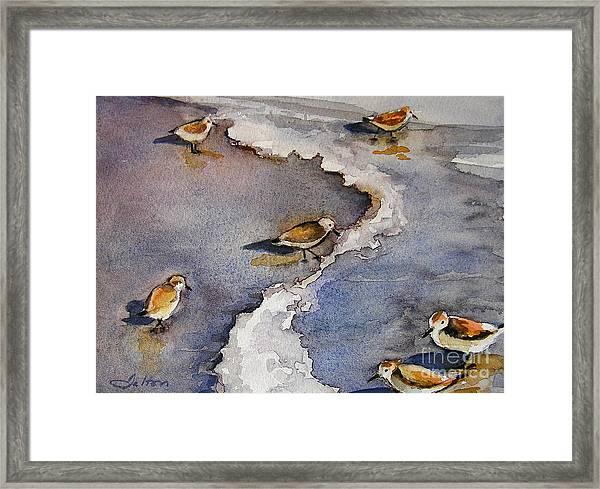 Sandpiper Seashore Framed Print