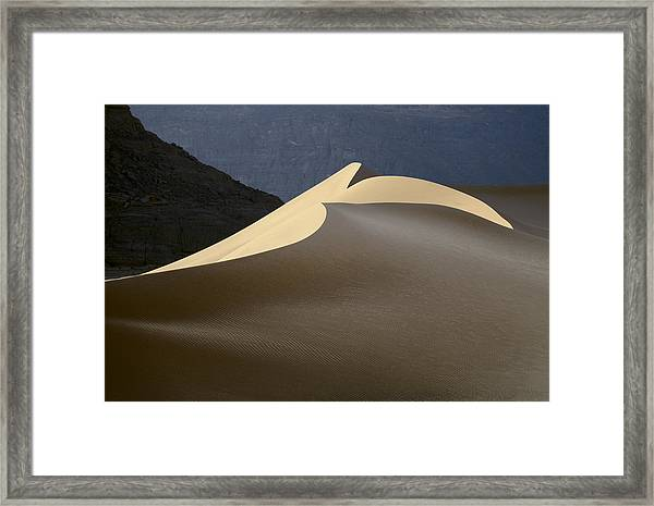 Sandy Bird Framed Print