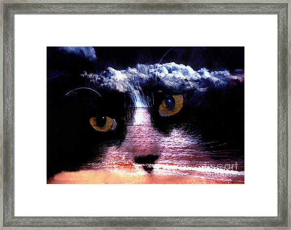 Sandy Paws Framed Print