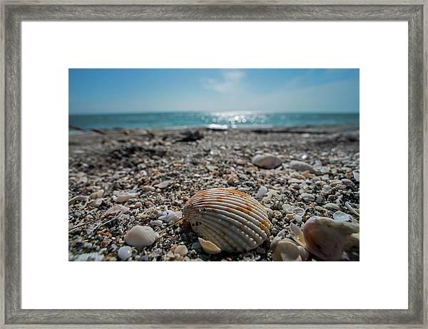 Sanibel Island Sea Shell Fort Myers Florida Framed Print