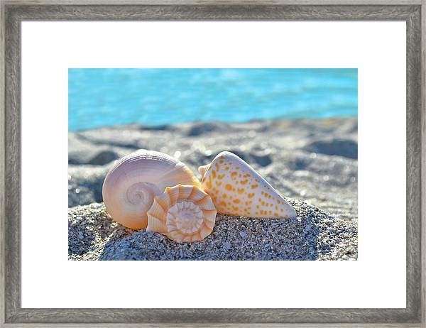 Sanibel Treasures  Framed Print