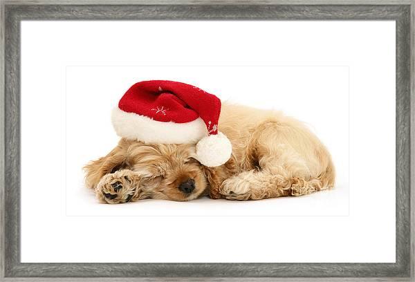 Santa's Sleepy Spaniel Framed Print