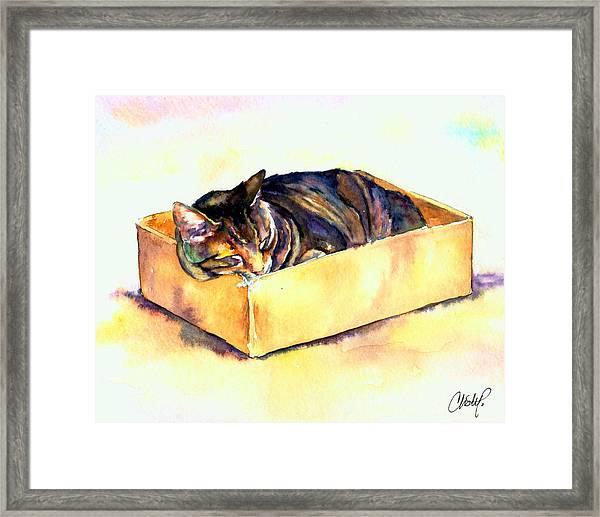 Sassy Sleeping Framed Print