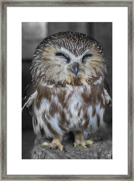 Saw Whet Owl Framed Print