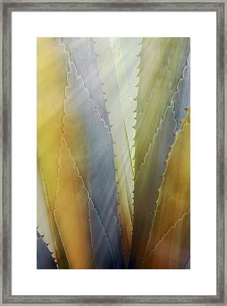 Sawtooth Agave Gold Light Framed Print