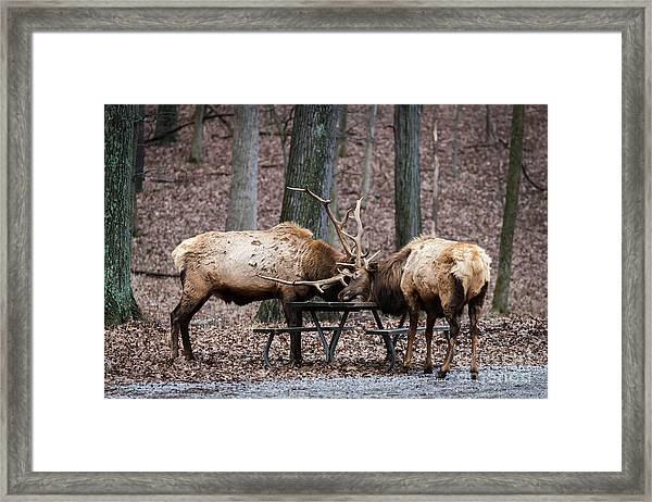 Say Uncle Framed Print