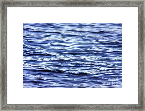 Scanning For Dolphins Framed Print