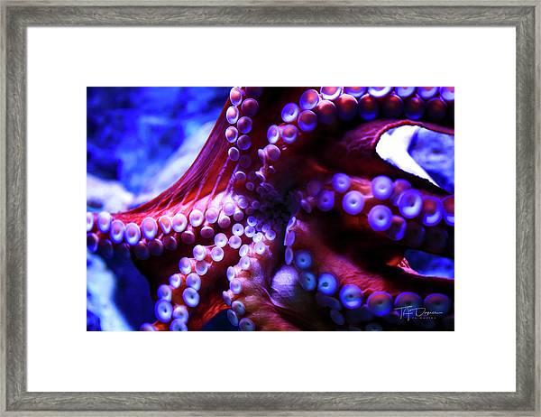 Scarlet Below Framed Print