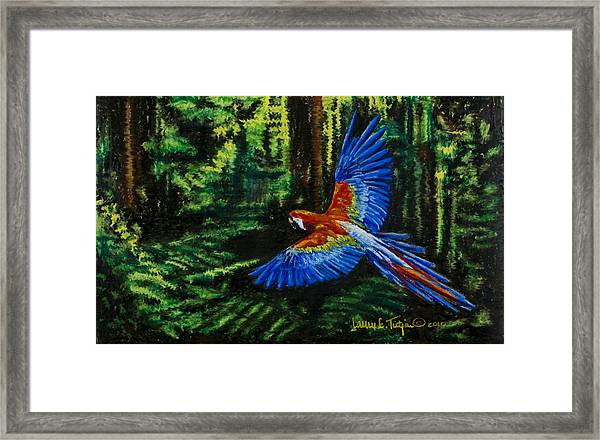 Scarlet Macaw In The Forest Framed Print