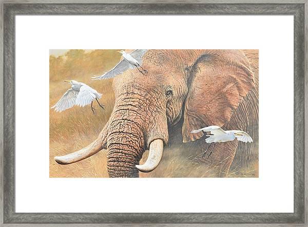 Scatter Framed Print